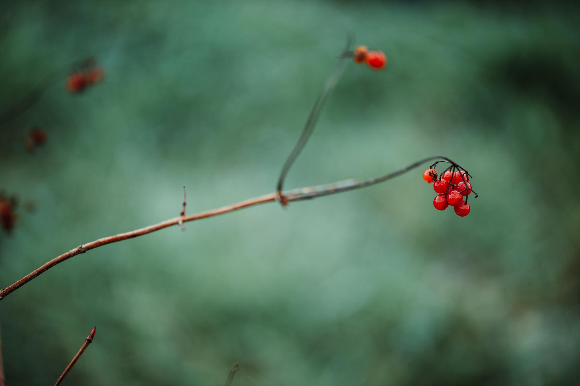 autumn19-1