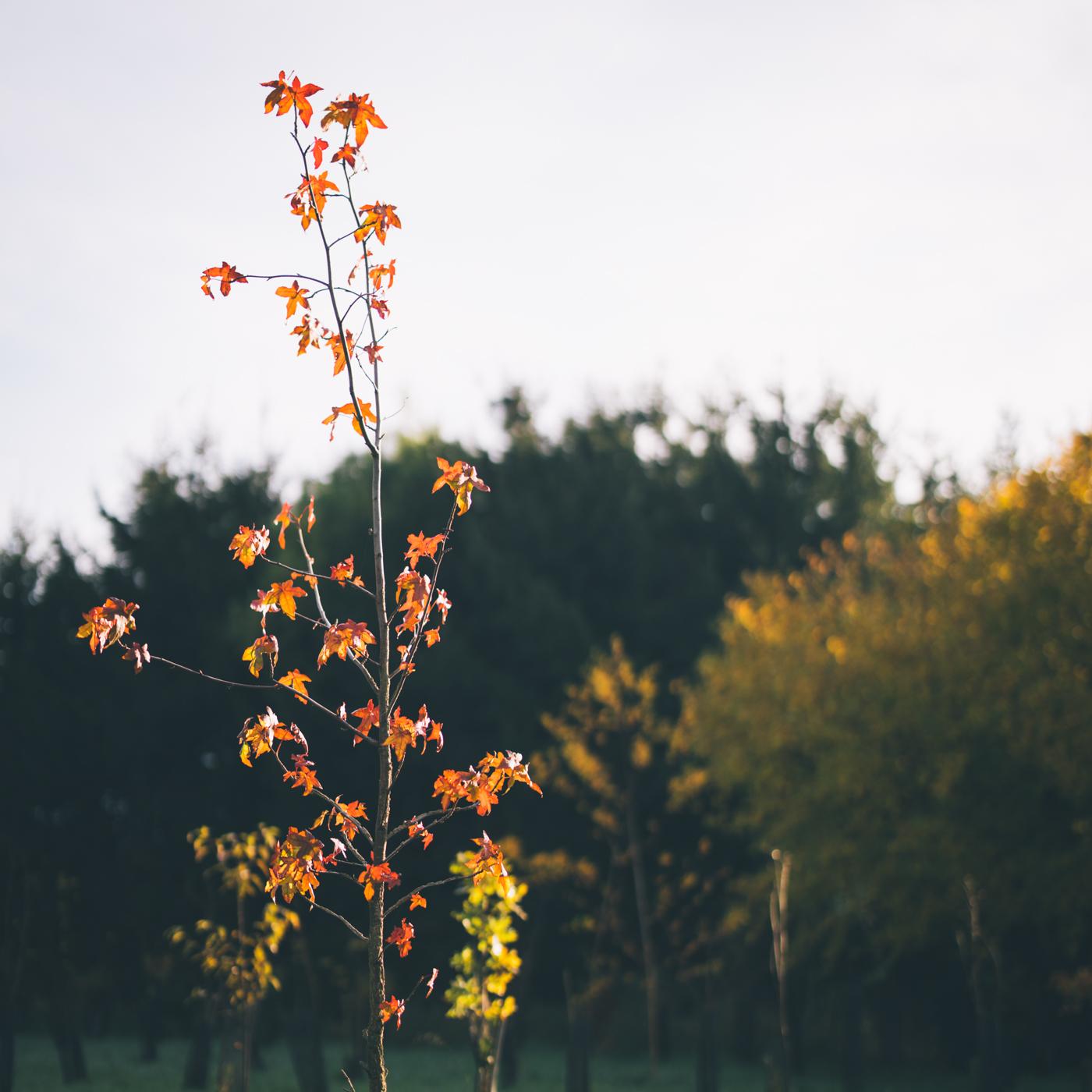 autumn19-2
