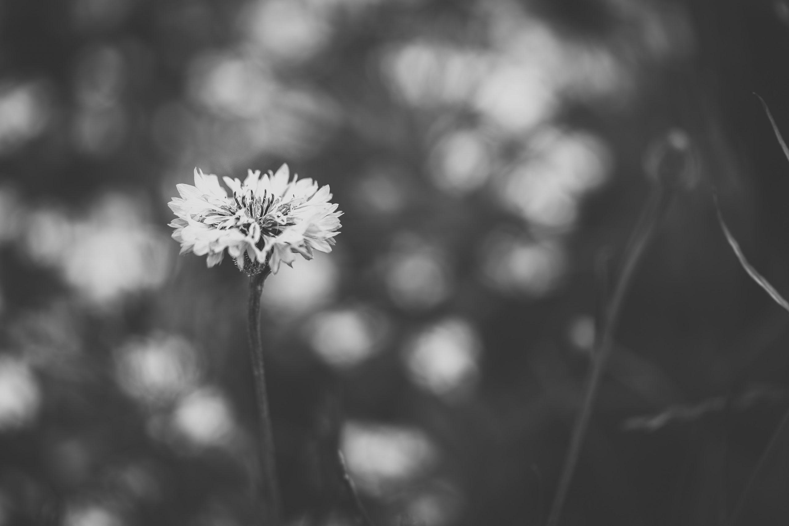 white-flower-big